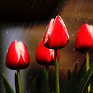 *Tulips in the Rain* by DeeZ (D L Honeycutt)