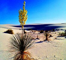 White Sands Yucca by Roger Passman