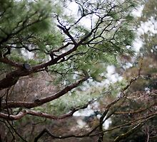 Koto-in garden trees by photoeverywhere