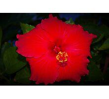 Pentagonal hibiscus Photographic Print
