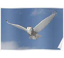 Snowy Angel Poster