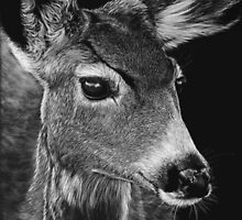 Doe, A Deer by Heather Ward