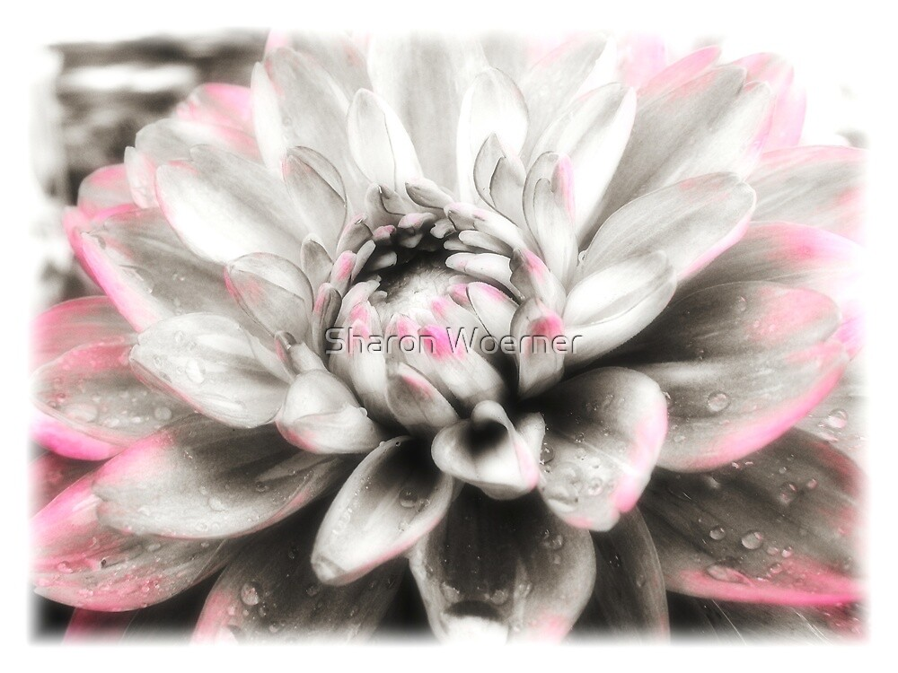 Dreaming of Dahlia by Sharon Woerner