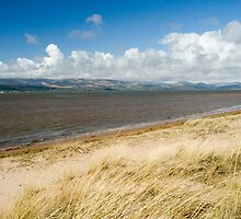 Dune grass at Askam in Furness by photoeverywhere