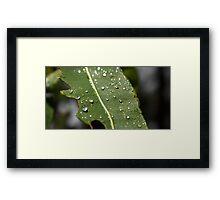Raindrops On Gumtrees Framed Print