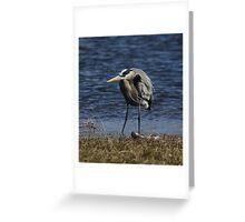 Grumpy Heron Greeting Card