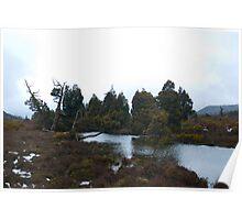 pine lake trees Poster