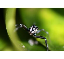 Little Blue Spider Photographic Print