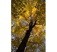 Under the Golden Autumn Canopy Photographic Print