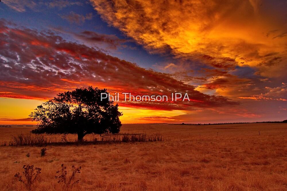 """Sundown On Cochranes"" by Phil Thomson IPA"