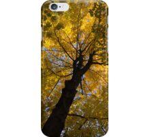 Under the Golden Autumn Canopy iPhone Case/Skin