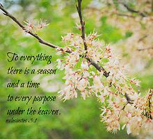 Season Ecclesiastes 3 by Kimberose