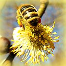 Bees Bum by ©The Creative  Minds
