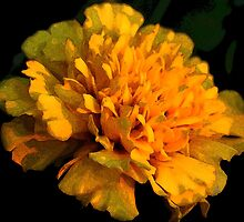 Glowing Marigold by Karen Harrison