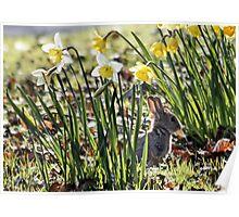 Bunny in Springtime Poster