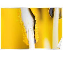 Macro Pollen Poster