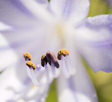 Macro Flower 1 by axemangraphics