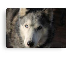 Siberian Husky Portrait Canvas Print