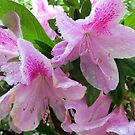 Azaleas In the Rain by AuntDot