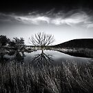 Elmley Marshes.  by Ian Hufton
