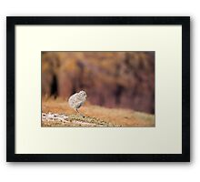 Fluffball Walking Framed Print