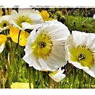 Poppies close up by Marlene Hielema