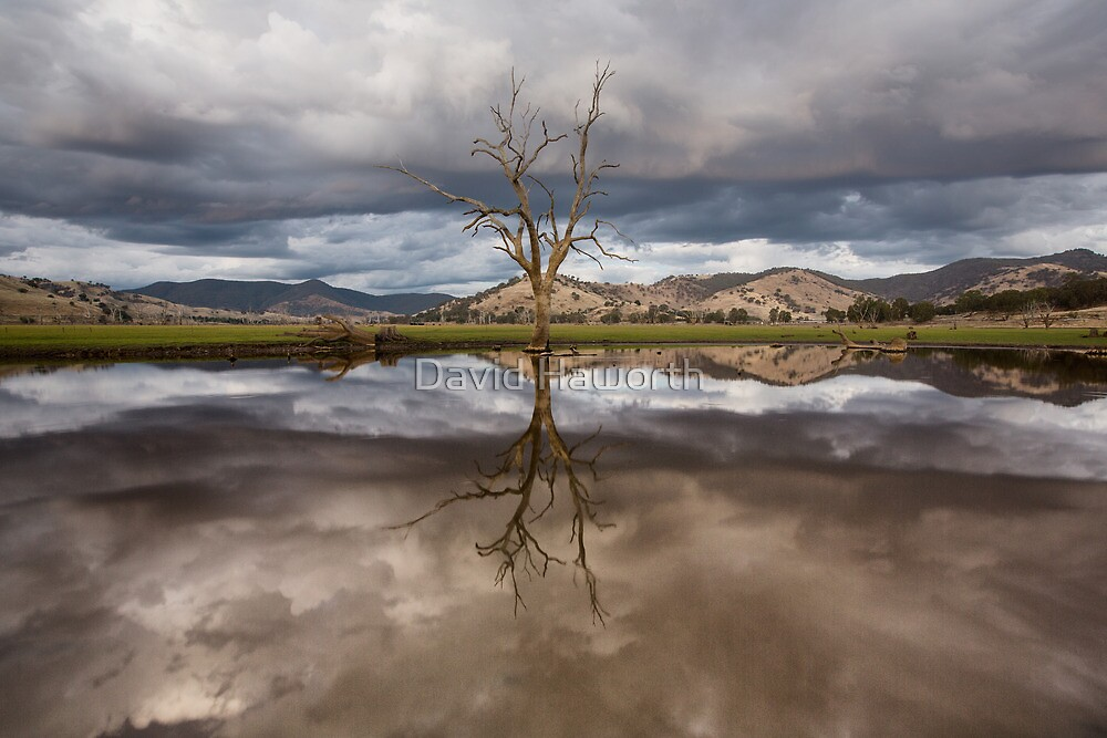My roots in the clouds by David Haworth
