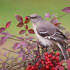Mockingbird in Nandina by Bonnie T.  Barry