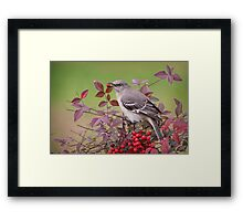 Mockingbird in Nandina Framed Print