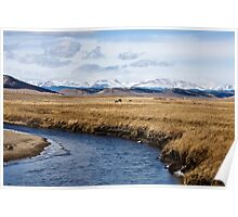 Late winter grazing - Park County, Colorado Poster