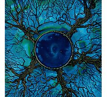 Interconnected Tree of Life Photographic Print