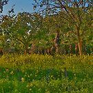 Field and Trees in Town by Nira Dabush