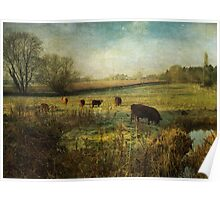 Cows in the Early Morning Poster