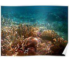Beautiful underwater corals Poster