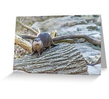 Otter Derp Greeting Card