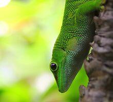 Lizard In A Tree by jimrac