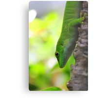 Lizard In A Tree Metal Print