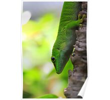 Lizard In A Tree Poster