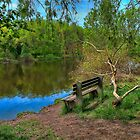 Bench near the broken willow by the rive by Benjamin Gelman