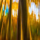Abstract Nature -  Blurred Trees by T M B