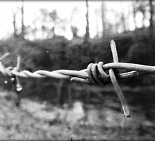 Barbed Wire by Ross Jones