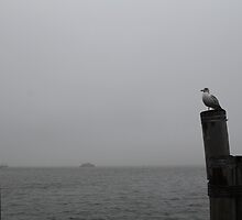 Solitary by chancemaycrown