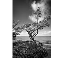 the point Photographic Print