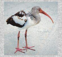 Juvenile white ibis T-Shirt