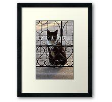 Burt Waits Framed Print