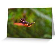 Speckled Hummingbird In Mindo, Ecuador Greeting Card
