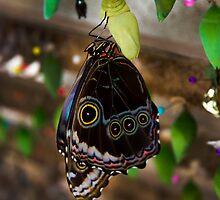 Butterfly Gathering In Mindo, Ecuador by Al Bourassa
