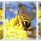 Honey Bee Collection by ©The Creative  Minds