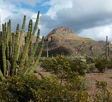 Organ Pipe Cactus  by Lucinda Walter