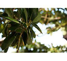 epcot - iii - manicured vegetation Photographic Print